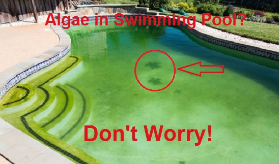 Algae-in-swimming-pool