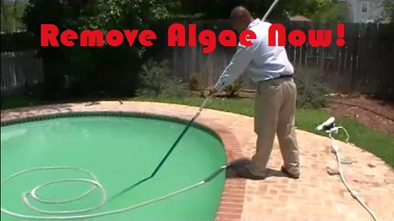 remove-algae-from-pool